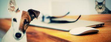 10 beroepen voor dierenliefhebbers