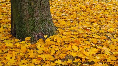 Bewustwording van de manier waarop seizoenswisselingen lichaam en geest beïnvloeden is belangrijk om actie te ondernemen en je emotionele welzijn te verbeteren.